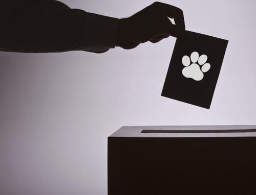 GAIA lance www.jevoteanimaux.be, son site web pour les élections du 26 mai