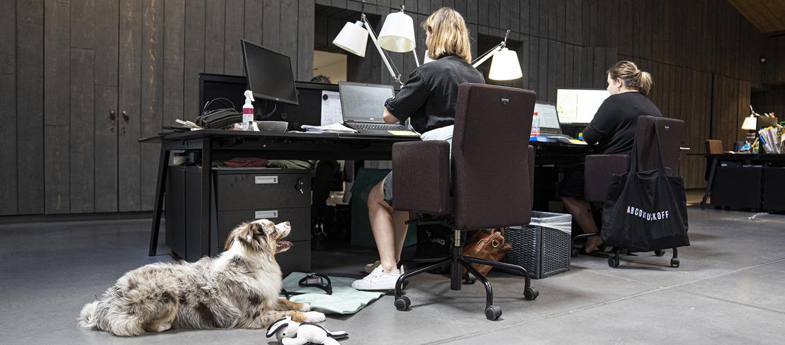 Persbericht: 15 kantoorhonden testen de werkvloer uit tijdens 'Take Your Dog To Work Day'
