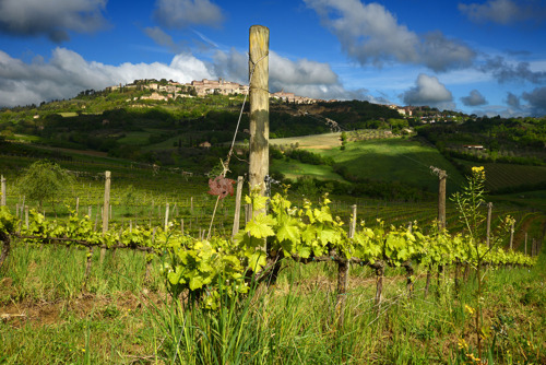 Weingut Salcheto: Umweltverträgliches Wachstum dank nachhaltiger Philosophie