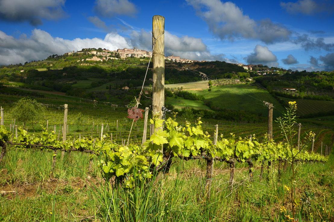 Vineyards, © Salcheto