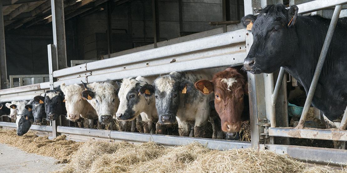 Voedermaatregelen en aangepaste bedrijfsvoering kunnen mestproductie reduceren