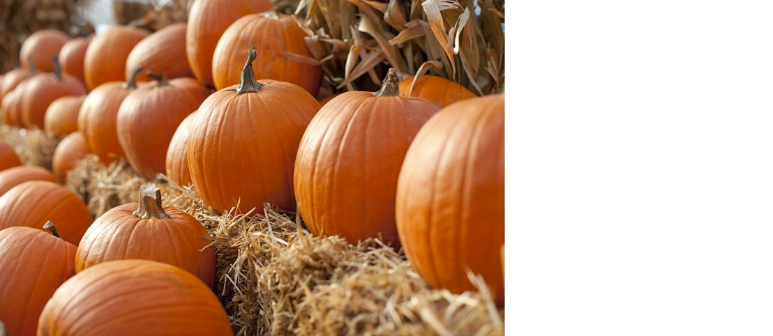 Time to pick the perfect pumpkin at Pike Nurseries!