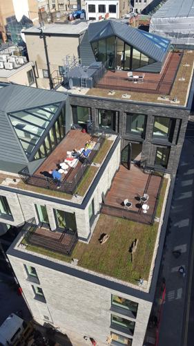 Les toitures vertes en ville gagnent en popularité