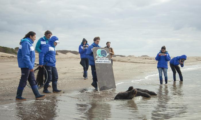 4 lobos marinos regresaron al mar tras recuperarse de cuadros de desnutrición