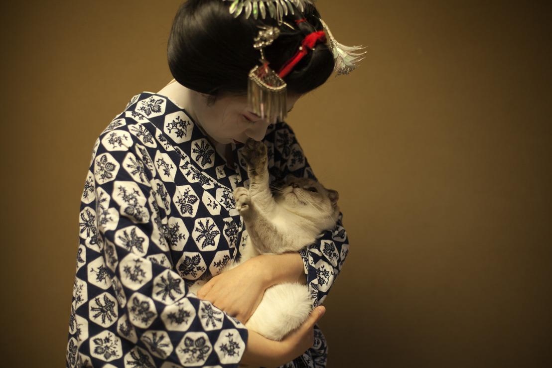 IBASHO organiseert een tentoonstelling rond katten in Japan