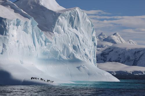 """Selon le WWF, la série documentaire événement """"Notre Planète"""" met en lumière la nécessité d'une action globale pour protéger la nature."""