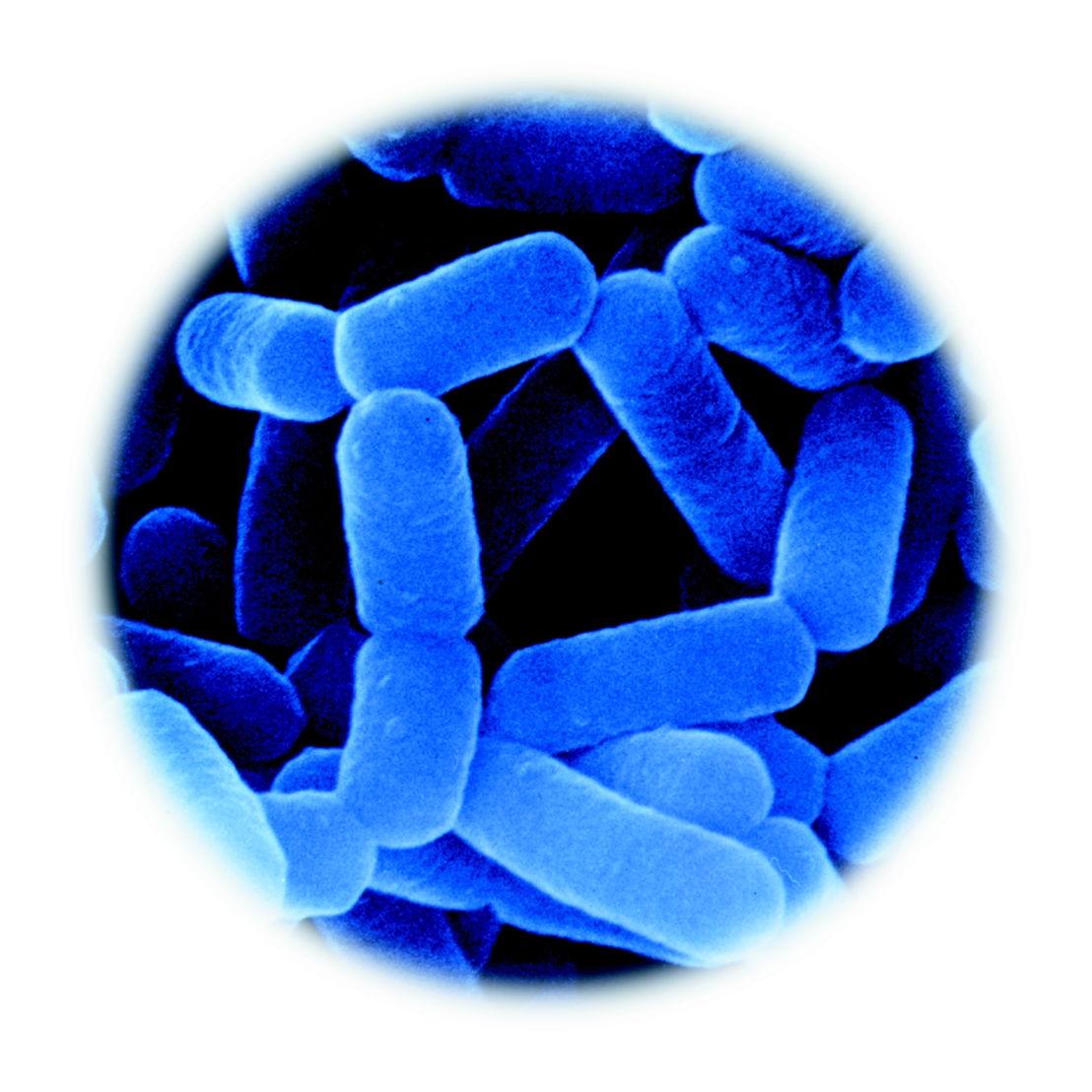 Bactérie LcS