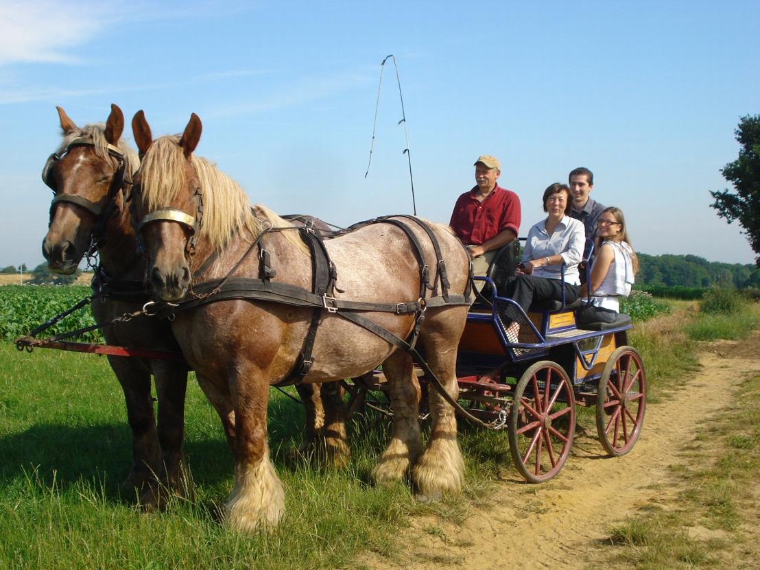Virtueel op tocht met het Brabants trekpaard