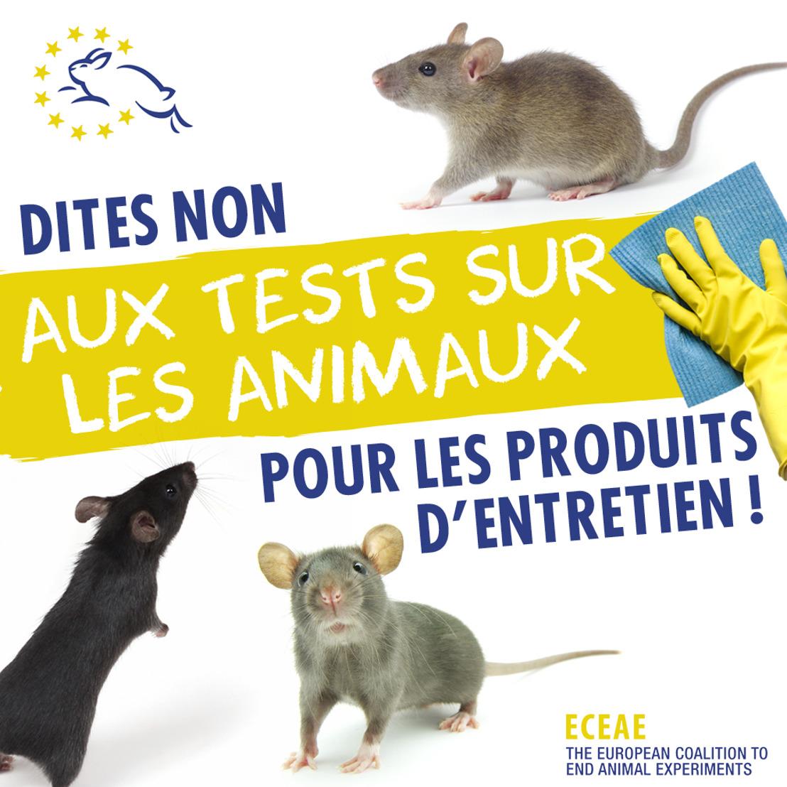 « Ne passez pas l'éponge sur la souffrance animale ! »