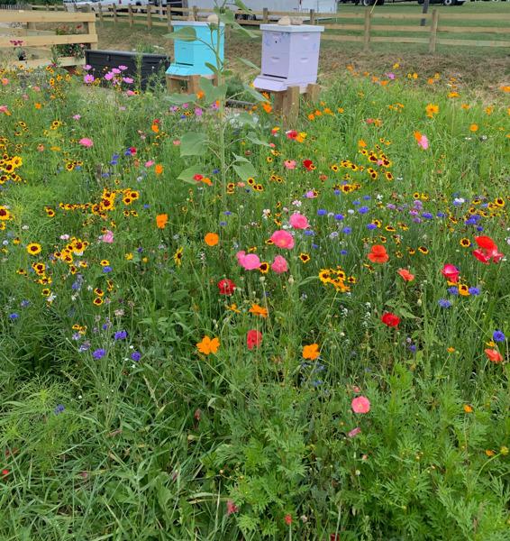 Preview: GROWMARK System Offering Pollinator Garden Program