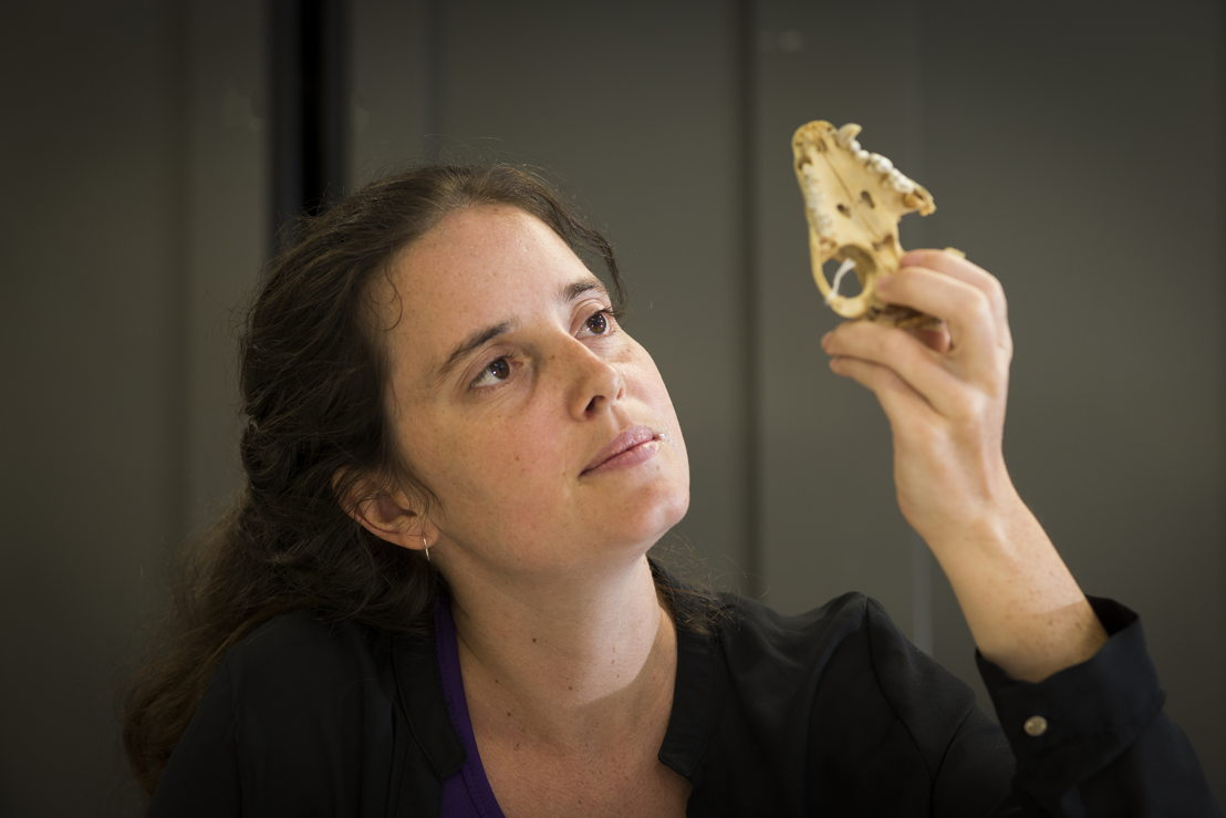 ANU PhD scholar Shimona Kealy with the skull of a Tasmanian Devil. Image credit: Stuart Hay, ANU