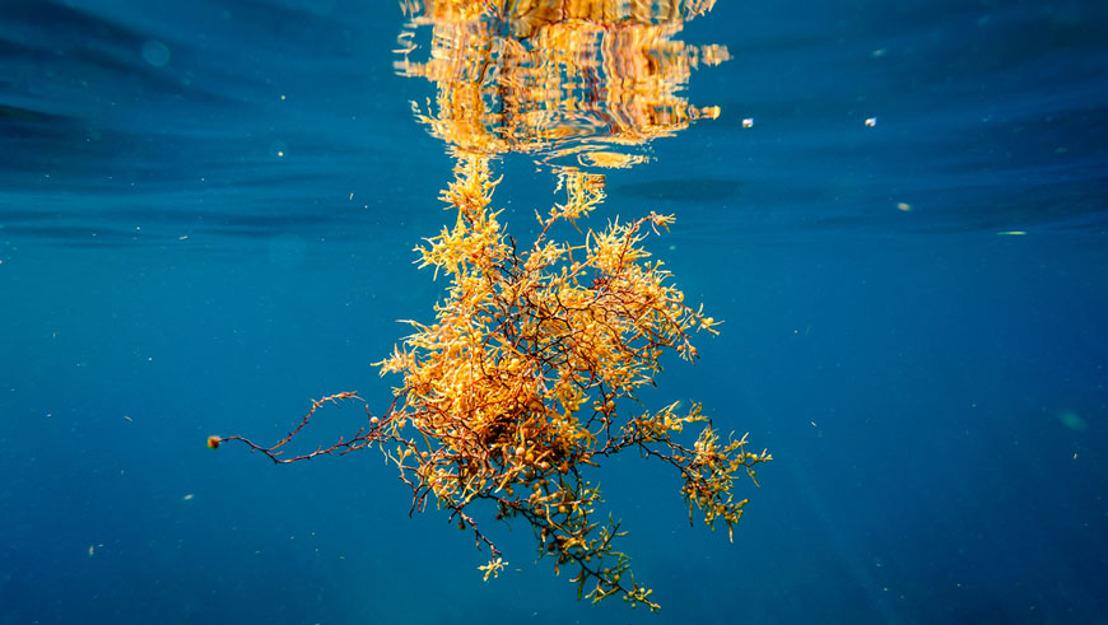 Communities innovate to address Sargassum seaweed on coasts of Saint Lucia