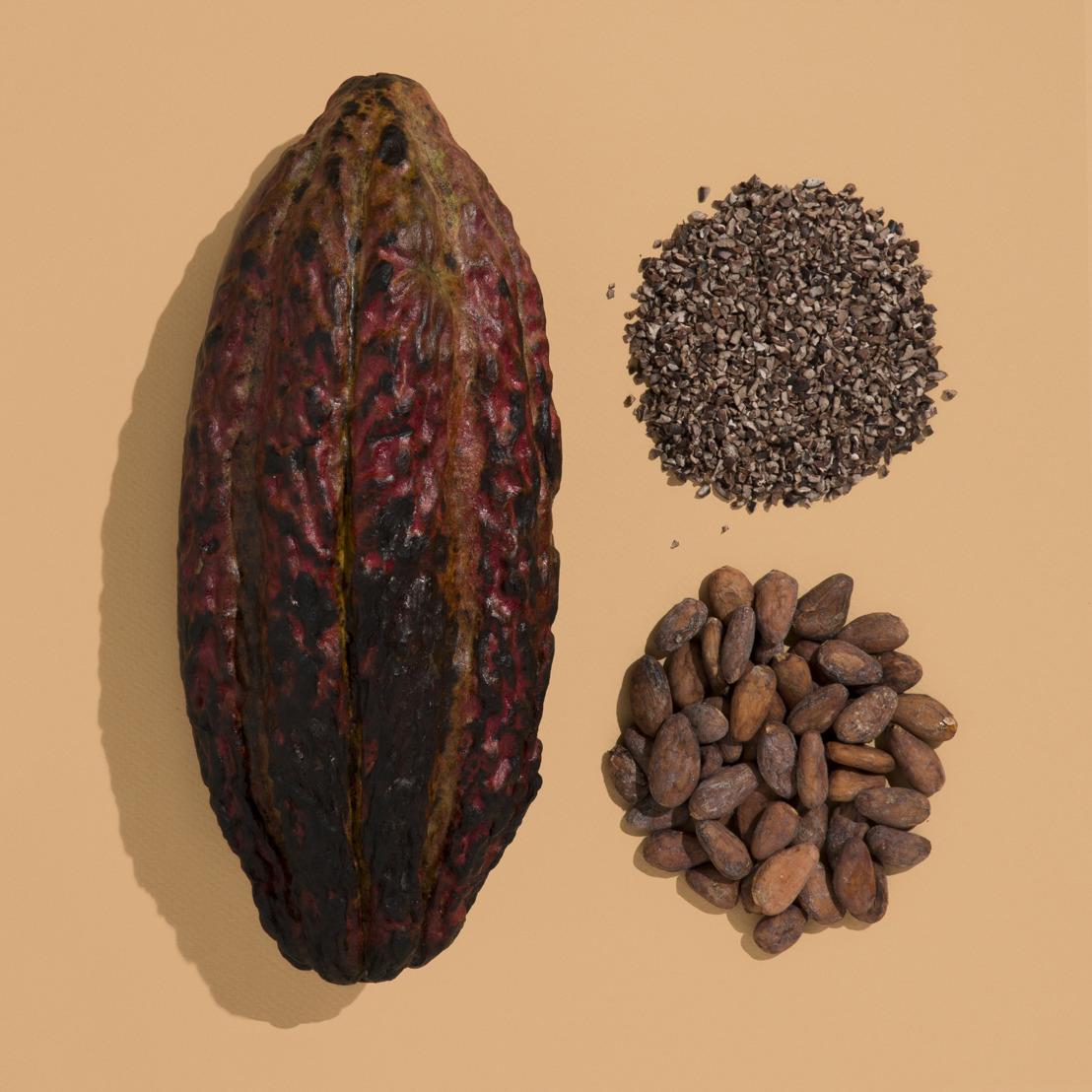 Criollo, il mito del cacao più raro: dal Venezuela arrivano i 2/3 del raccolto mondiale