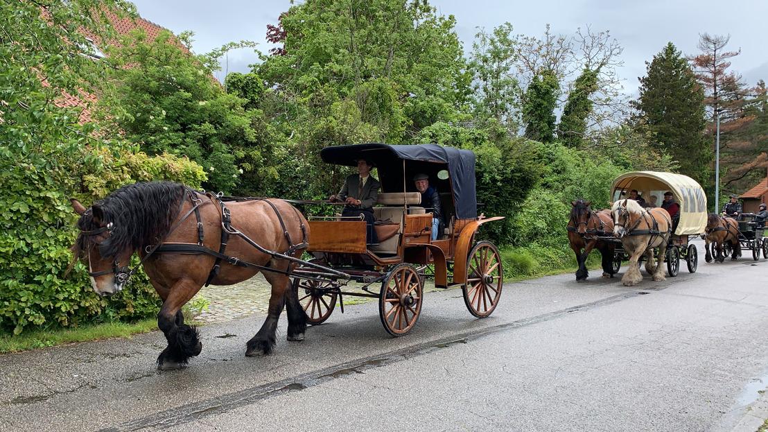 Trekpaarden trekken door Kampenhout