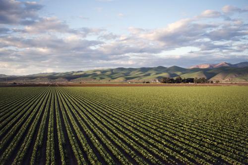 Le WWF réagit au rapport du GIEC sur l'utilisation des terres : « Il faut changer de système alimentaire si on veut limiter la crise climatique »