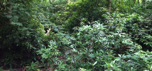 Exotenbestrijding om biodiversiteit te behouden
