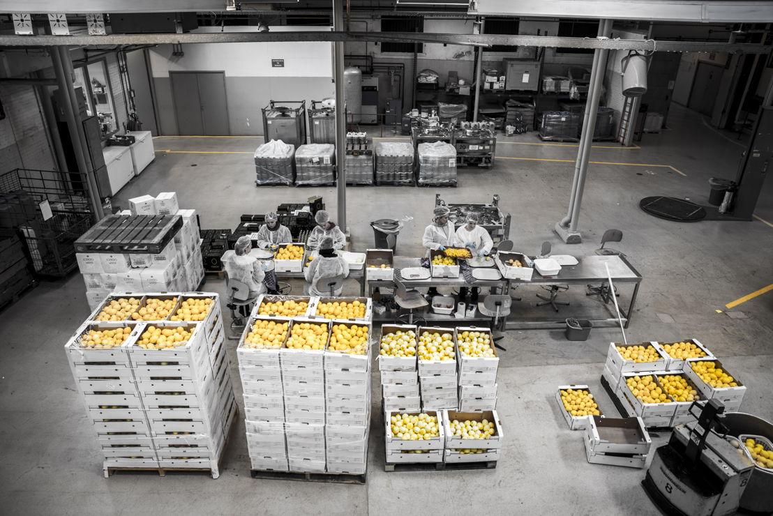 Productie Fiorito Limoncello in Schiedam