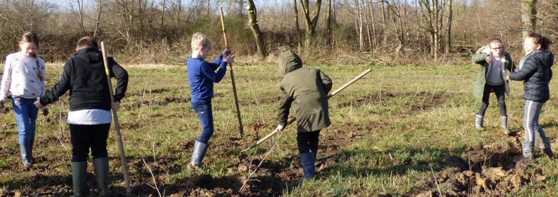 Scholen helpen mee aan bosuitbreiding aan het Drongengoed