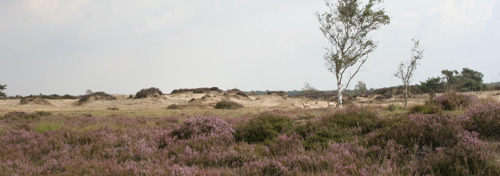 Extreme droogte zorgt voor brandfase rood in natuurgebieden provincies Antwerpen en Limburg