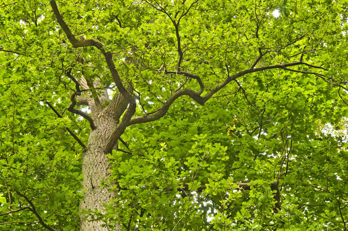 Principiële beslissing omtrent bescherming van de meest waardevolle en ruimtelijk kwetsbare bossen