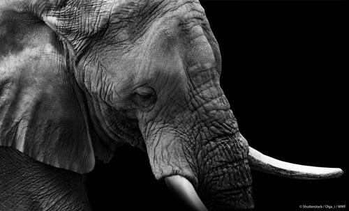 Living Planet Report 2018: mens verantwoordelijk voor 60% minder wilde dieren op 40 jaar tijd