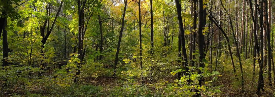 Nieuwe bebossingssubsidie en online simulator moeten mensen makkelijker eigen bos doen planten