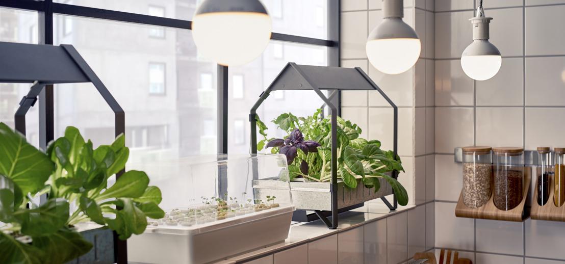 Kweek plantjes het hele jaar door in je eigen huis met IKEA