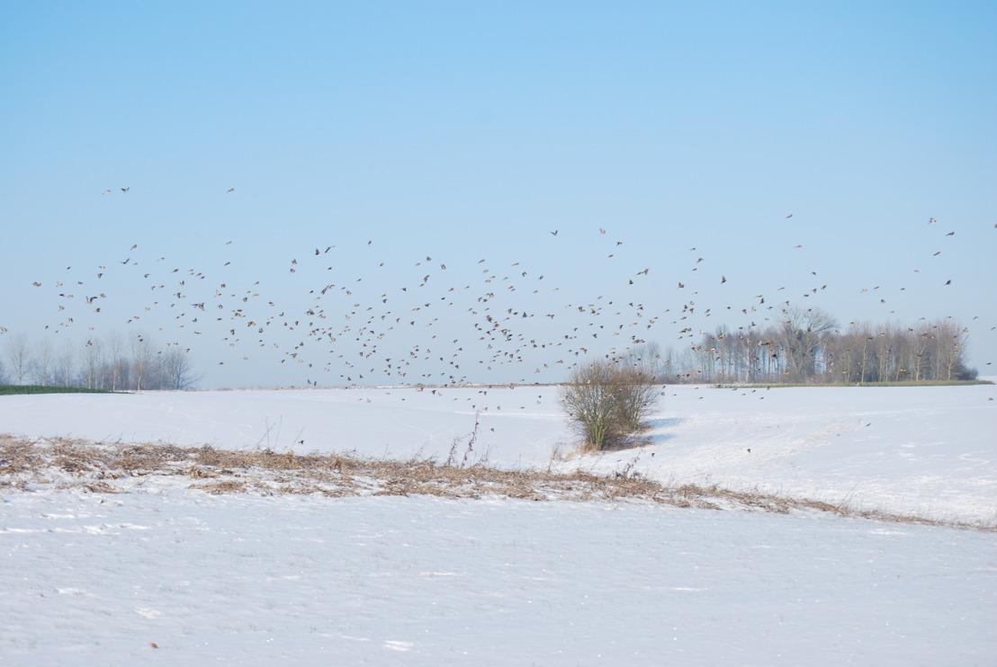 159 Haspengouwse landbouwers helpen akkervogels de winter door