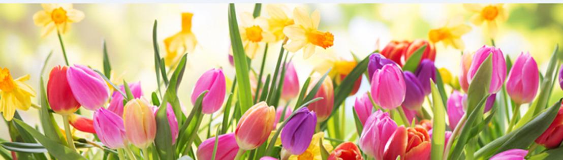 Chez oSérieux! il flotte comme un petit air de printemps!