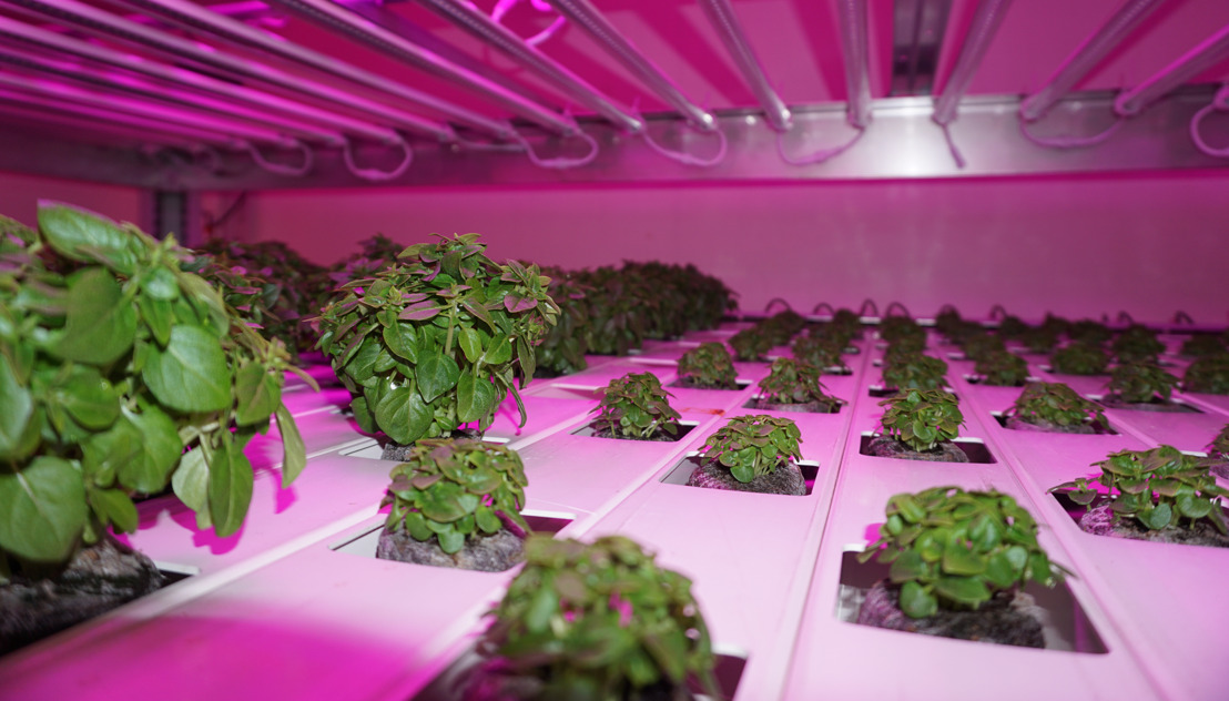 Smart City: Urban Harvest launches its sustainable vertical farm in the heart of Brussels