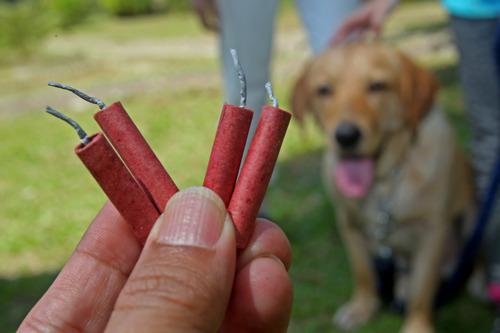 Vuurwerk: dieren in paniek