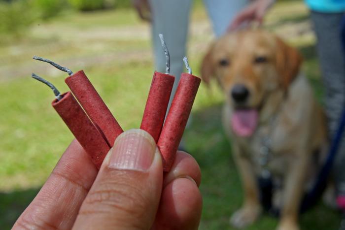 Vuurwerk = dieren in paniek