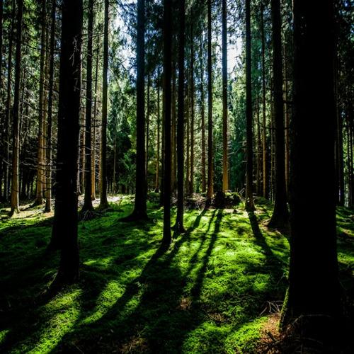 AEG denkt aan de natuur en lanceert haar catalogus online
