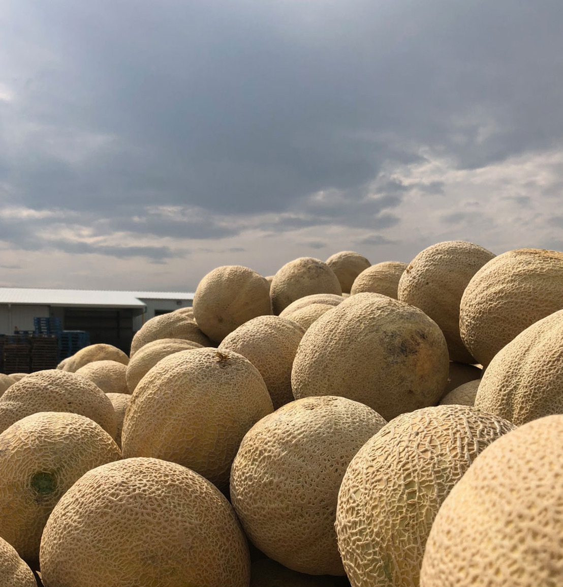Last chance for Rocky Ford Melons and Cantaloupes!