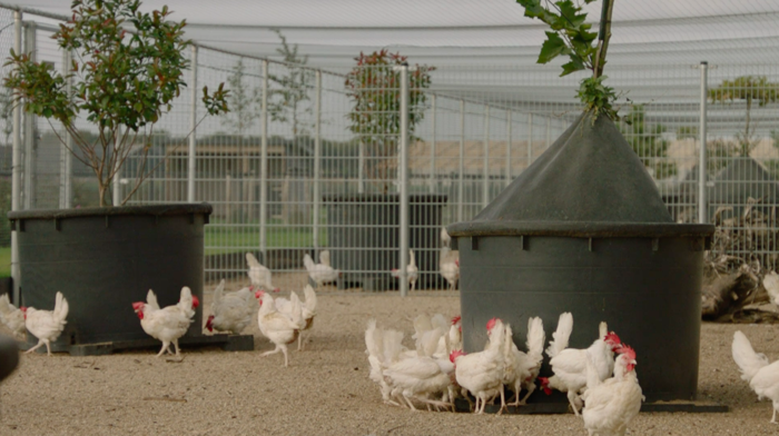Preview: Meest dier- en milieuvriendelijke legboerderij ter wereld komt naar België