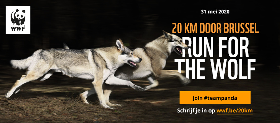 20km van Brussel - WWF roept op om te lopen voor de wolf in België