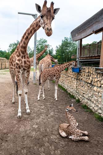 Copyright foto's: Zoo Antwerpen en Planckendael
