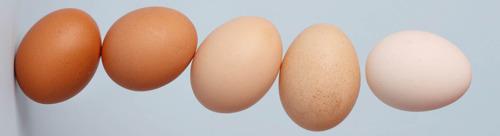 Több áruházláncot is maga mellé állított a Tojásszövetség az EU-konform ketreces tojás ügyében
