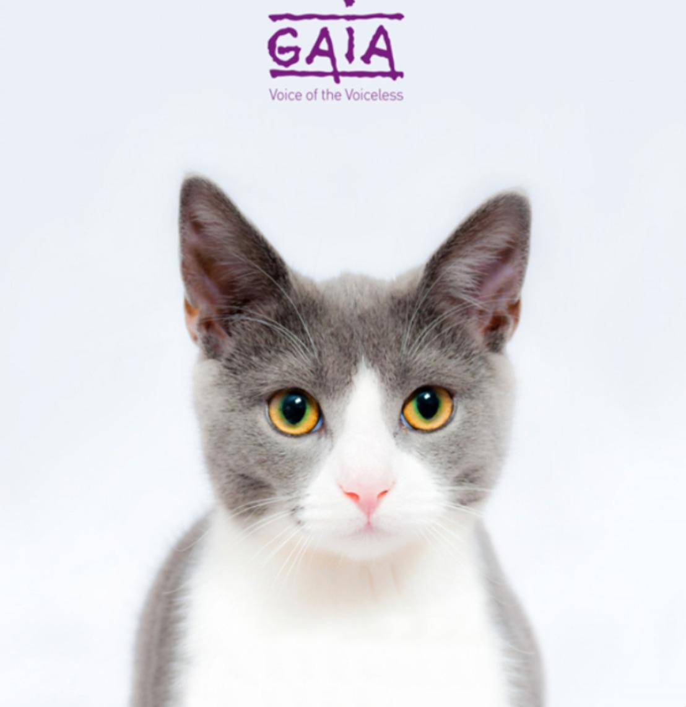 *Correction: COMMUNIQUE DE PRESSE// La Chambre vote la réduction de la tva sur la stérilisation des chats