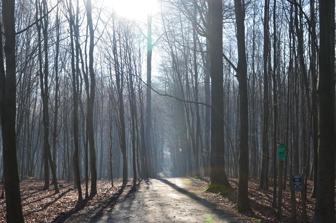 Journée de la Forêt de Soignes à Drohme Park, ce dimanche 21 octobre