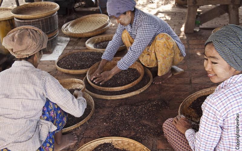 Myanmar_Burmese Cigar Making in Bagan