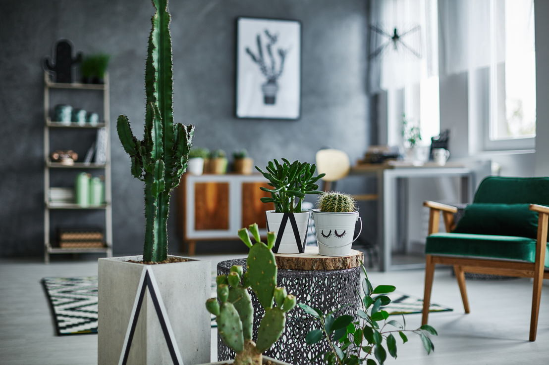 Le Cactus Day est un concept tout nouveau qui aura lieu le mardi 21 novembre à COCOON.