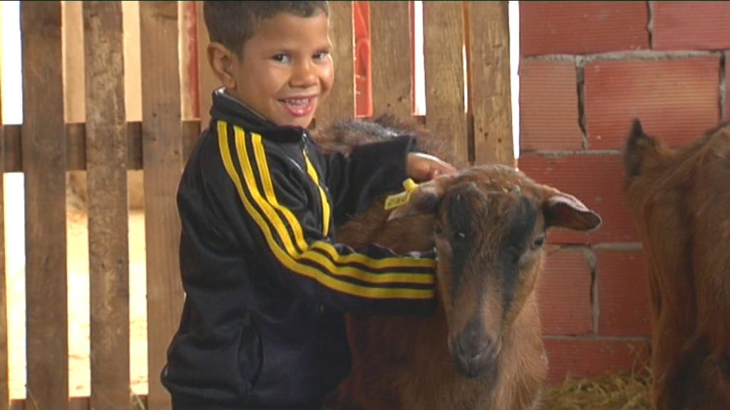 Karrewiet in Marokko - aflevering 3 (7.4) : de geitenboerderij - (c) VRT