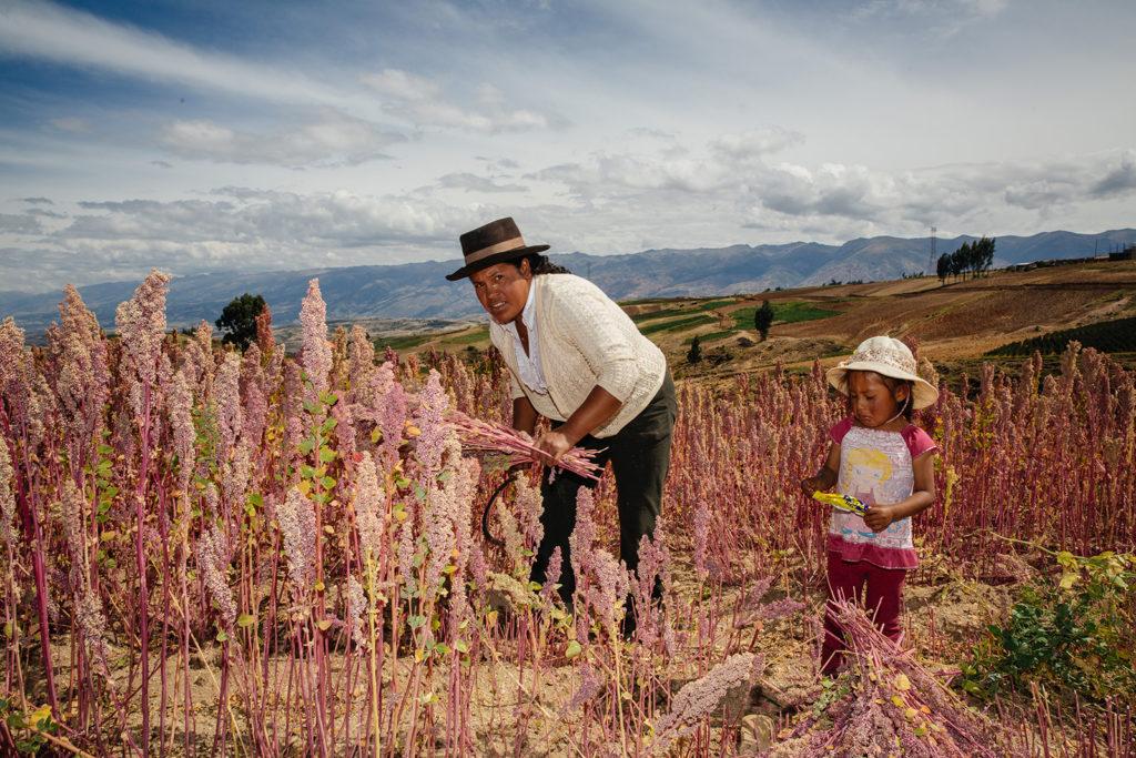 Quinoa in Peru