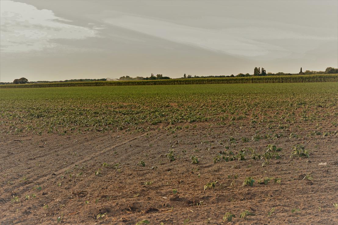 Gevolgen droogte voor de agromilieumaatregelen en beheerovereenkomsten