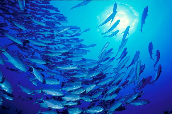 Preview: Bewuste Visweek = consument gaat massaal voor visproducten met keurmerk