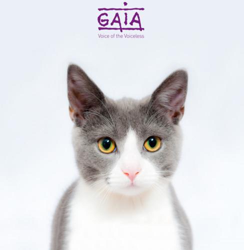 PERSUITNODIGING // Overhandiging petitie 'Voor een verlaagd btw-tarief voor kattensterilisatie' aan Kamervoorzitter Siegfried Bracke
