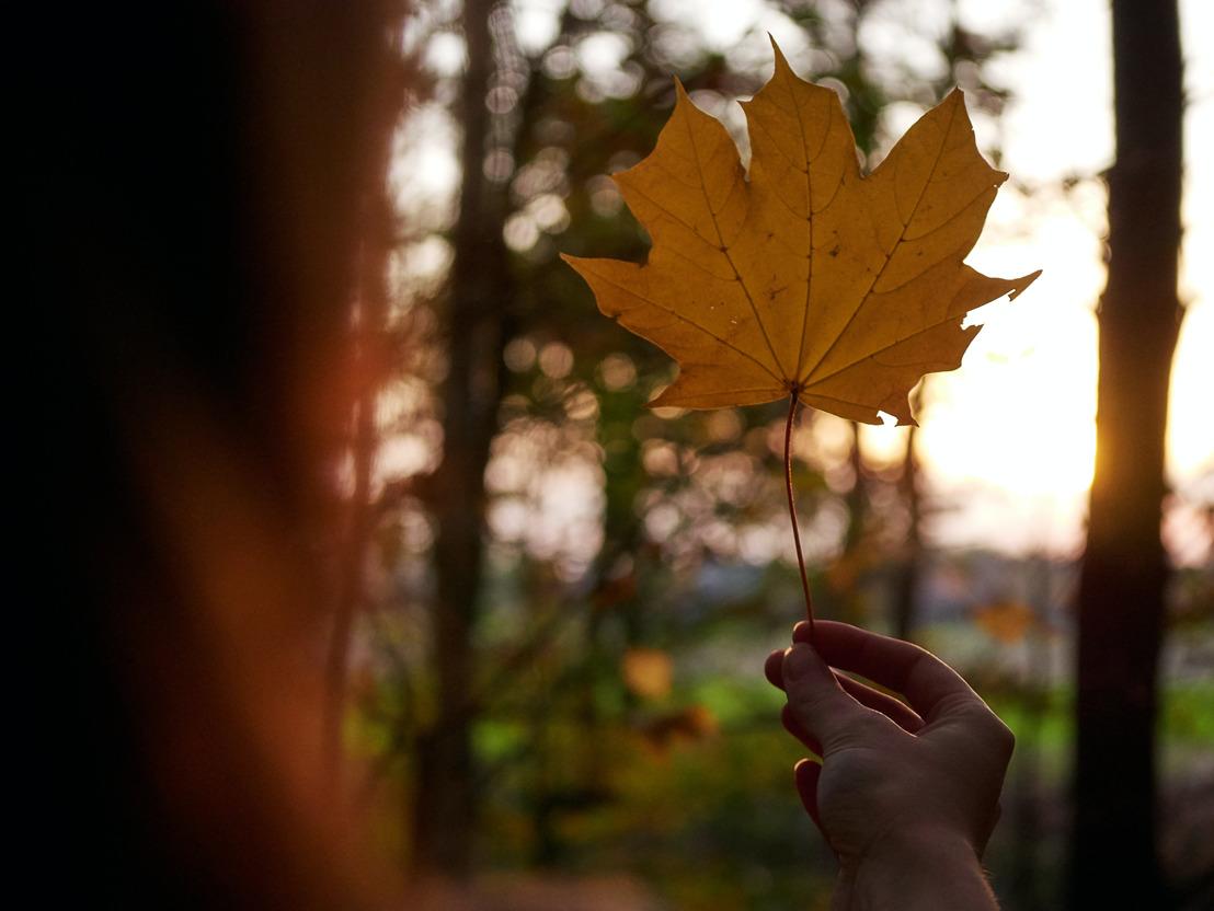Colores de otoño: los tonos con los que nos animamos a cambiar de estación