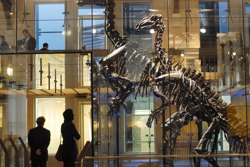 L'aile Jeanlet au Musée des Sciences Naturelles