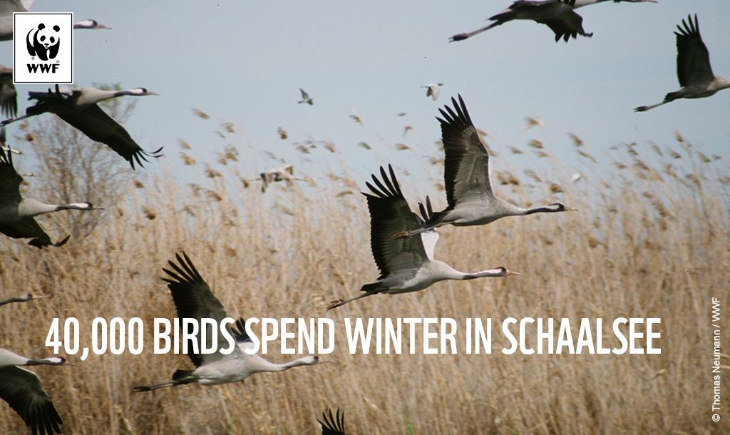 Schaalsee - (c) Thomas Neumann WWF